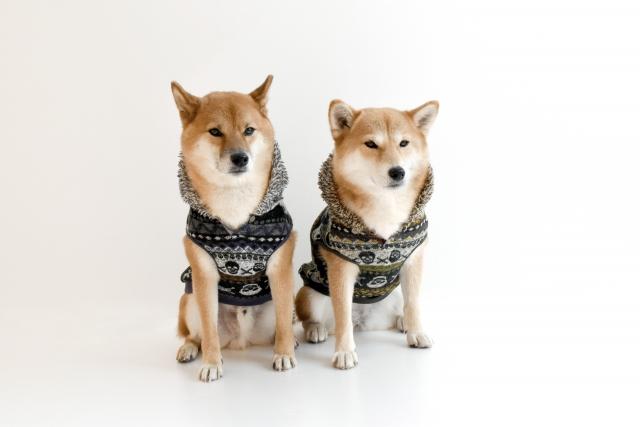 柴犬の服選びでオススメの機能服