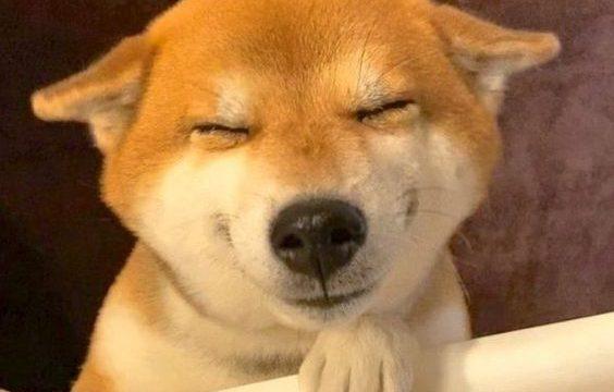 柴犬ヒコーキ耳