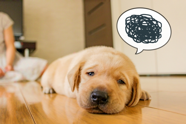 おくちとめんえきは副作用や下痢を起こすって本当?