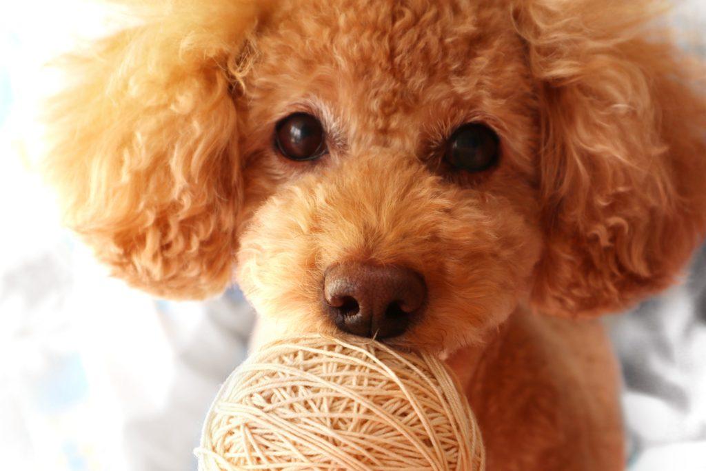 ヘムジ(韓国Youtube)の犬の名前や性格は?12個の芸を披露する!