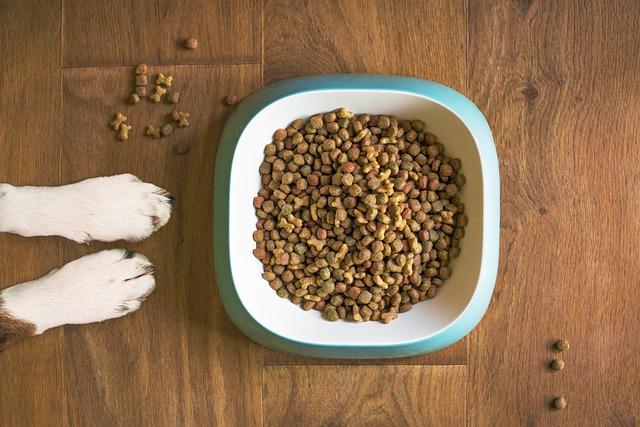 犬がドッグフードを食べない時の対処法をご紹介