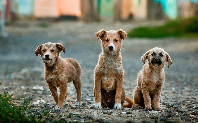 子犬から成犬になる過程で適量が変わった